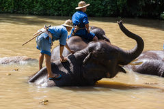 Słonia skąpanie Zdjęcia Stock