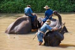 Słonia skąpanie Fotografia Royalty Free