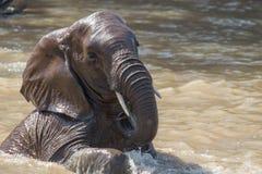 Słonia skąpanie Obrazy Stock