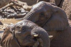 Słonia skąpanie Zdjęcie Stock