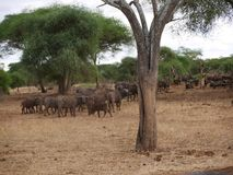 Słonia zakończenie na Tarangiri safari - Ngorongoro Obrazy Stock