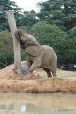 słonia zoo fotografia royalty free
