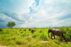słonie grupują dzikiego fotografia stock