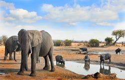 Słonie i przylądka bizon ext waterhole z tłem niebieskiego nieba i krzaka Obrazy Royalty Free