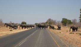 Słonie krzyżuje drogę w Afryka Zdjęcie Royalty Free