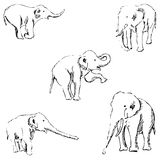 słonie nakreślenie ręką tła rysunku ołówka drzewny biel Obrazy Stock