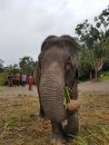 Słonie przy Patara słonia gospodarstwem rolnym, Chiang Mai, Tajlandia zdjęcia stock