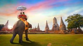 Słonie przy Wata Chaiwatthanaram świątynią w Ayuthaya Dziejowym parku, UNESCO światowego dziedzictwa miejsce, Tajlandia obraz royalty free