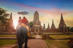 Słonie przy Wata Chaiwatthanaram świątynią w Ayuthaya Dziejowym parku, UNESCO światowego dziedzictwa miejsce, Tajlandia zdjęcia stock
