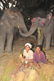 słonie szczęśliwi Zdjęcia Royalty Free