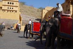 Słonie w Amer forcie Rajasthan zdjęcia royalty free