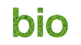 Słowa życiorys robić od zieleń liści odizolowywających na białym tle Fotografia Stock