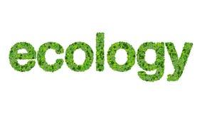 Słowo ekologia robić od zieleń liści odizolowywających na białym tle Zdjęcia Royalty Free