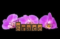 Słowo gracja z różowymi orchideami Zdjęcie Royalty Free