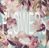 Słowo kwiaty robić papier na kwiecistym tle z różnorodnym lataniem kwitną zdjęcie royalty free
