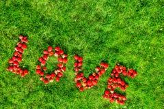 Słowo & x22; love& x22; robić truskawki na zielonym gazonie Obrazy Stock
