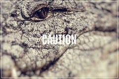 Słowo ostrożność Caiman twarz Zdjęcie Stock