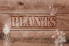 Słowo rośliny pisać na drewnianym brown tle Zdjęcia Stock