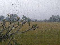 Słucha deszcz fotografia stock
