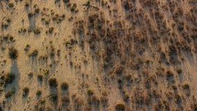 Słucham zebry krzyżuje sawannę widzieć od widoku z lotu ptaka jak zdjęcie royalty free