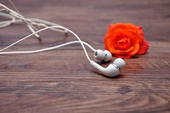 Słuchawki z z ostrości pomarańcze róży obraz stock