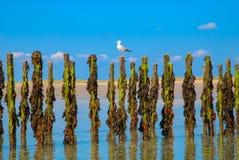 Słupy z niskim przypływem Fotografia Stock