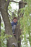 S'élever d'arbre photos libres de droits
