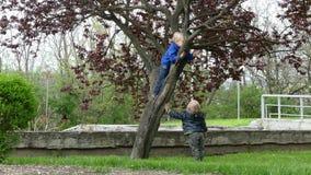 S'élever d'arbre clips vidéos