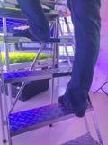 S'élever d'homme des escaliers à l'usine menée hydroponique photos libres de droits
