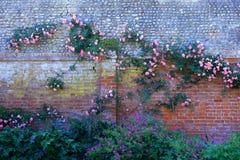 S'élever a monté dans des jardins de Connaught dans la ville de Sidmouth dans Devon est photographie stock