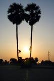 S'élever sur des arbres de plam Image stock