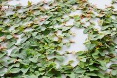 S'élever vert Photos stock