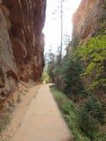 ` S Анджела приземляясь пеший путь, национальный парк Сиона, Юта Стоковые Фото