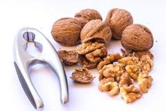 ` S грецкого ореха стоковые фото