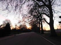 ` S дерева Silhouettes вниз с пути во время захода солнца стоковое фото