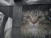 ` S кота в сумке стоковое фото