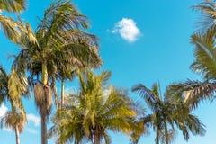 ` S пальмы стоковые фото
