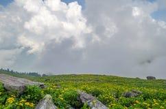 ` S природы имеет сад Стоковая Фотография RF