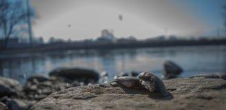 ` S раковины Morava Стоковые Изображения