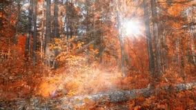 ` S солнца излучает в лесе осени стоковое изображение