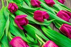 Цветочный узор сделанный розового тюльпана, зеленых листьев, ветвей на черной предпосылке стоковые фото
