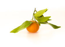 It's all about the orange. Beautiful shot of orange with leafs against white background Royalty Free Stock Images