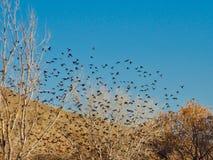 S'assemblant des oiseaux en novembre photographie stock