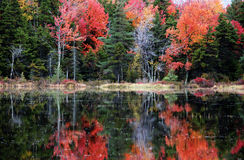 It's Autumn. An autumn day reflected in still waters Stock Photography