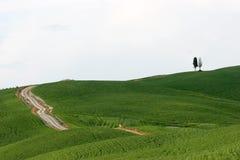 sławni cyprysów wzgórza Obrazy Royalty Free