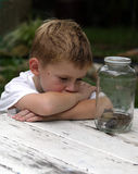 It's A Boys Life. A little boy examining the toads that he caught Stock Images