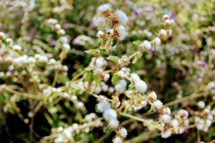 S cerrado ` Brazylijscy kwiaty fotografia royalty free