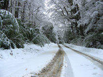 It´s cold out there. Snow storm in a road in the border Chile / Argentina. Nahuel Huapi Park Royalty Free Stock Image