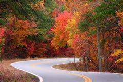 S-curves d'automne Image stock