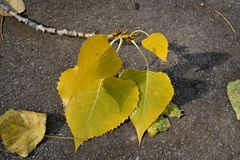 ` S d'automne intervenant Photos stock